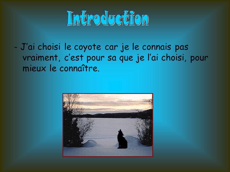 Introduction - J'ai choisi le coyote car je le connais pas vraiment, c'est pour sa que je l'ai choisi, pour mieux le connaître.