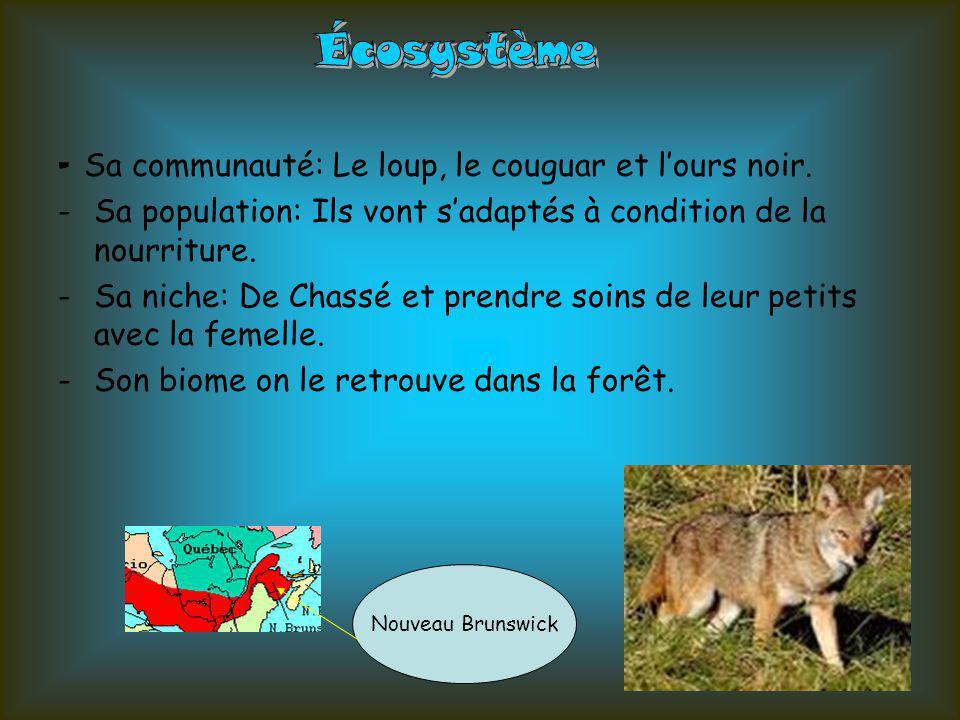 Écosystème - Sa communauté: Le loup, le couguar et l'ours noir.