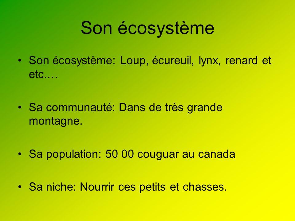 Son écosystème Son écosystème: Loup, écureuil, lynx, renard et etc.…