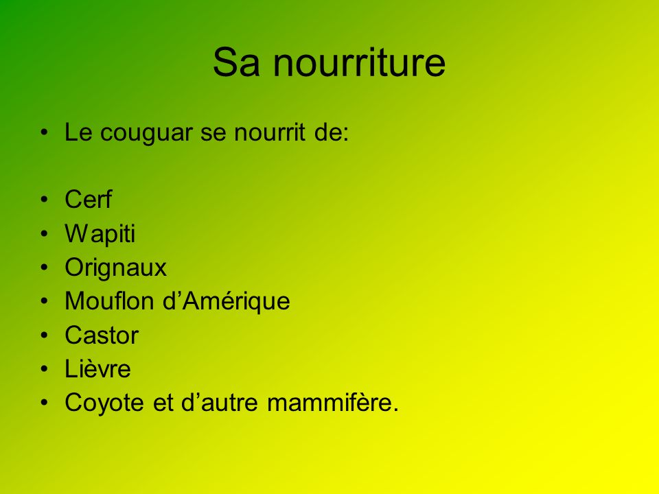 Sa nourriture Le couguar se nourrit de: Cerf Wapiti Orignaux