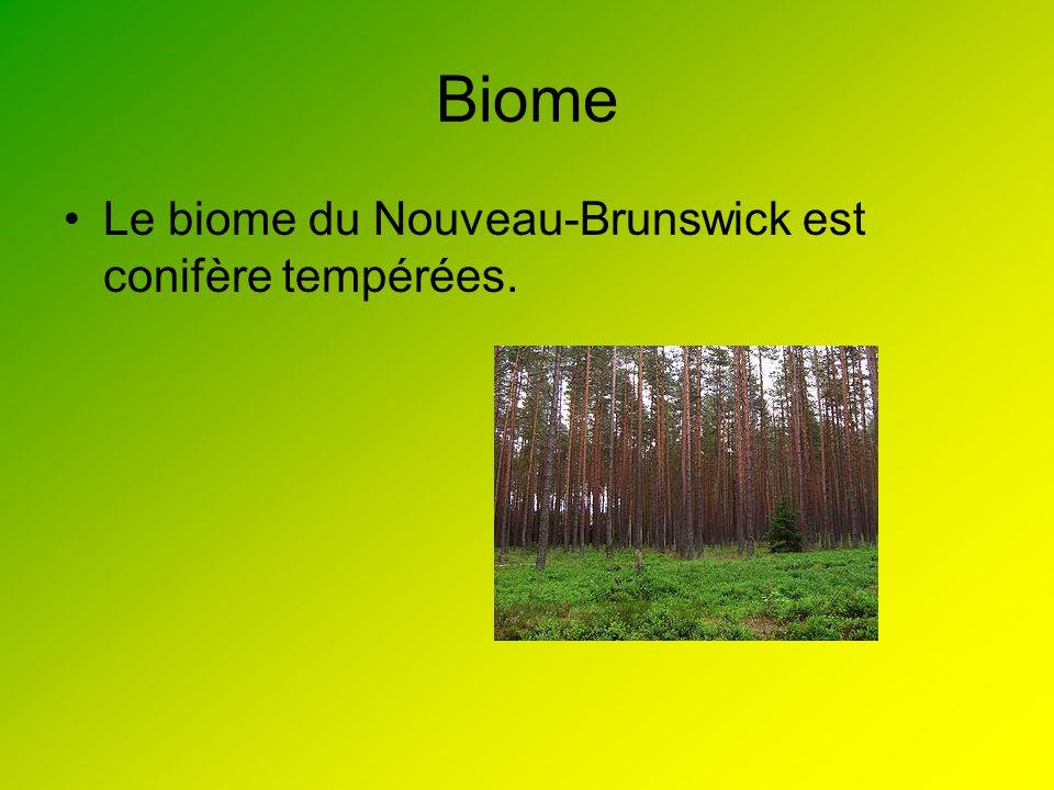 Biome Le biome du Nouveau-Brunswick est conifère tempérées.