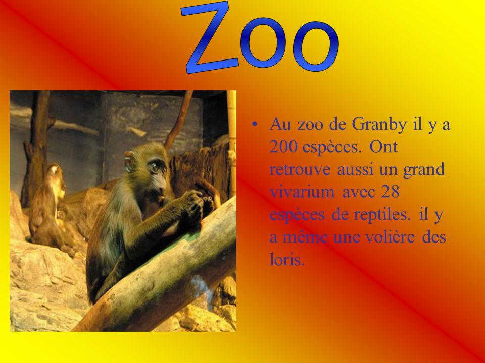 Zoo Au zoo de Granby il y a 200 espèces.