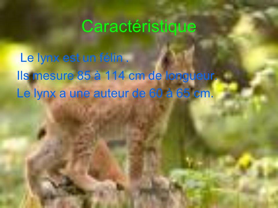 Caractéristique Le lynx est un félin .