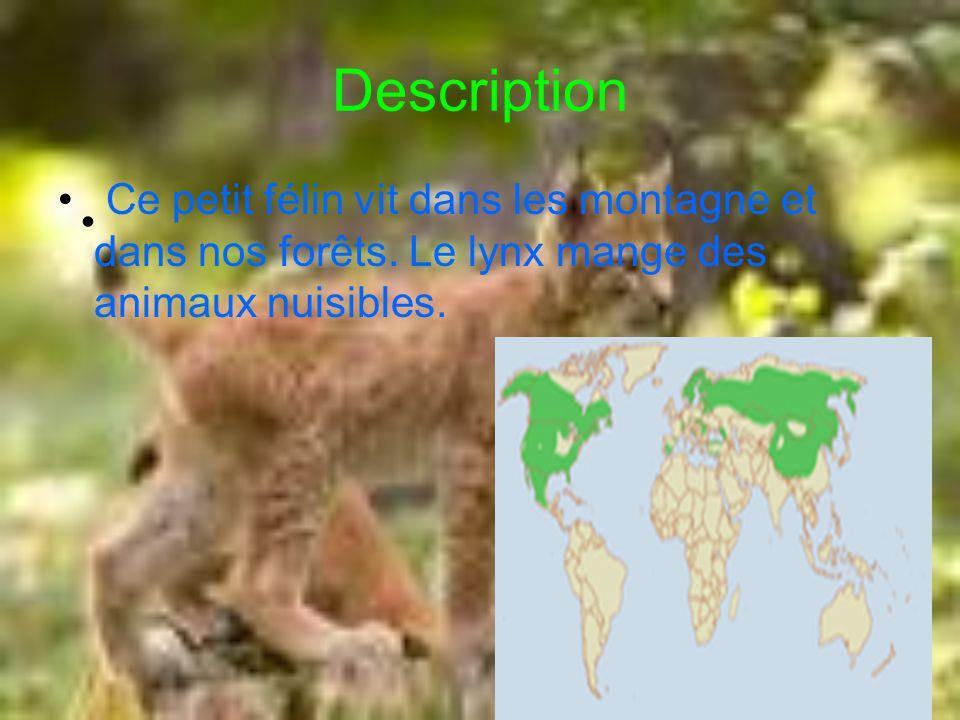 Description Ce petit félin vit dans les montagne et dans nos forêts.