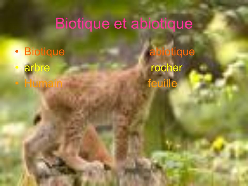 Biotique et abiotique Biotique abiotique. arbre rocher.