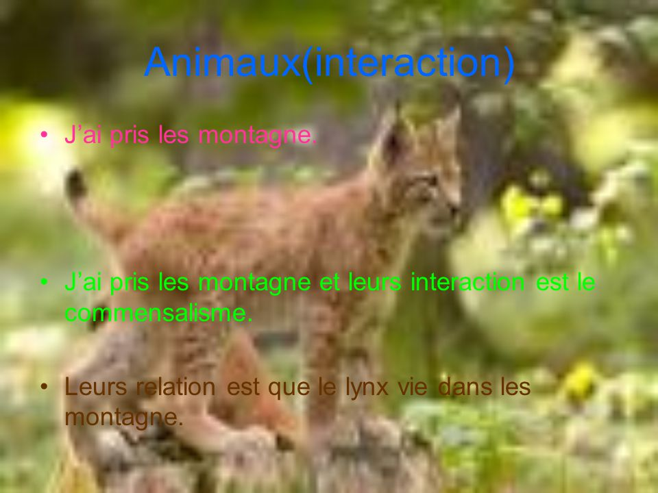 Animaux(interaction)