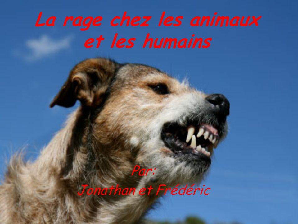La rage chez les animaux et les humains