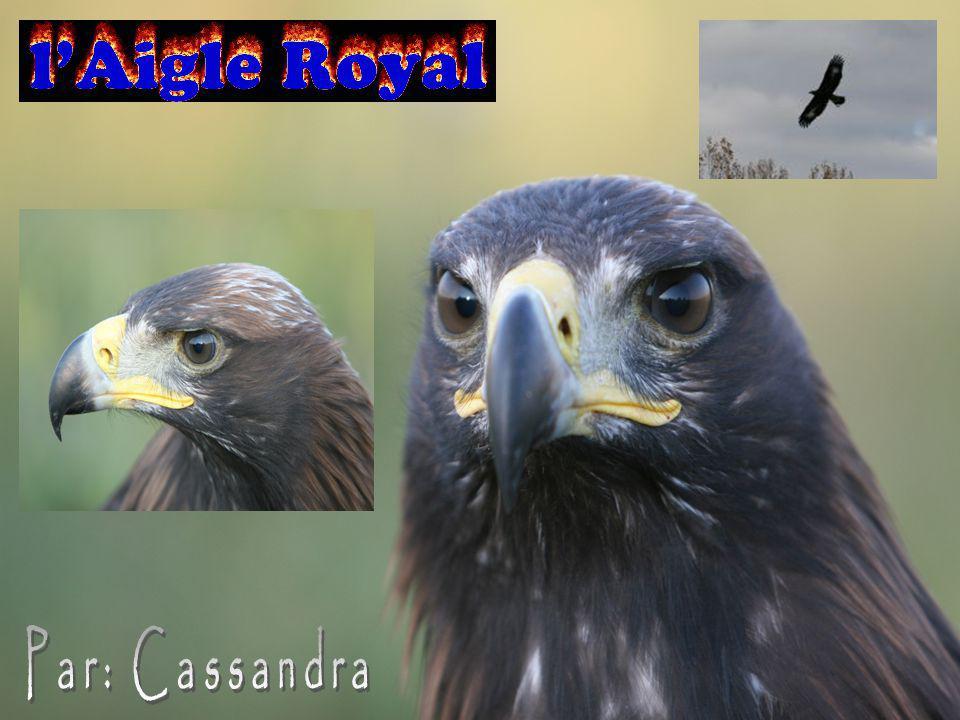 Par: Cassandra