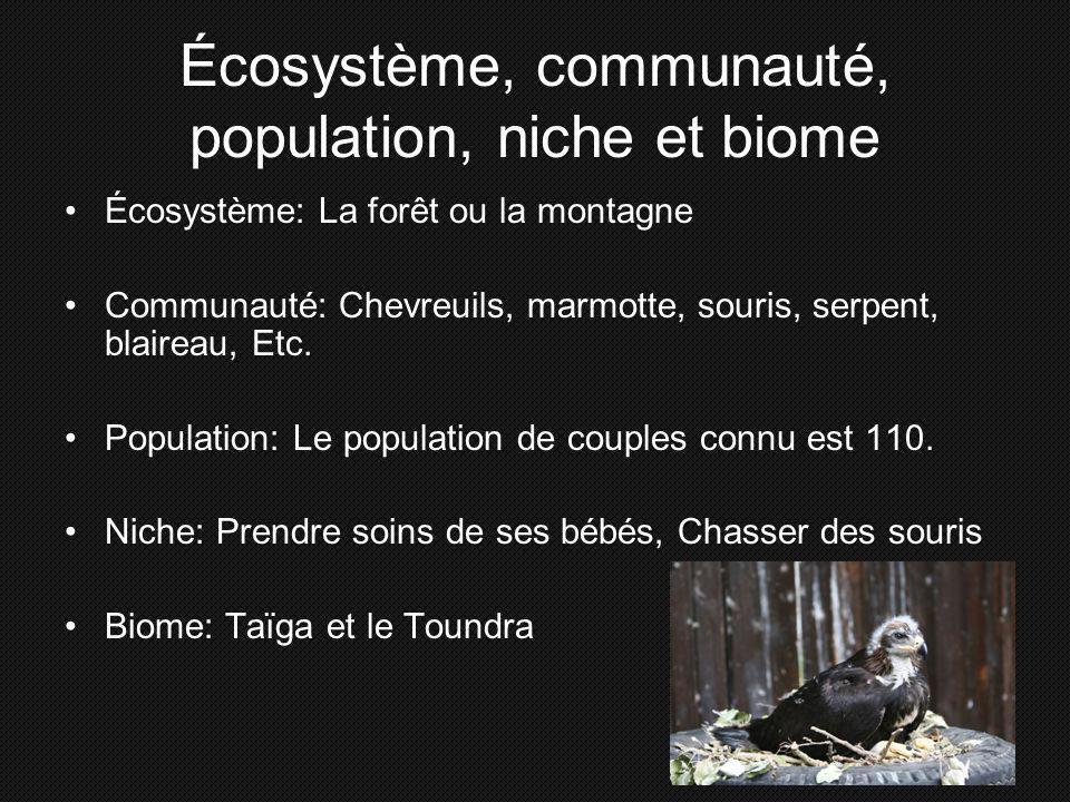Écosystème, communauté, population, niche et biome