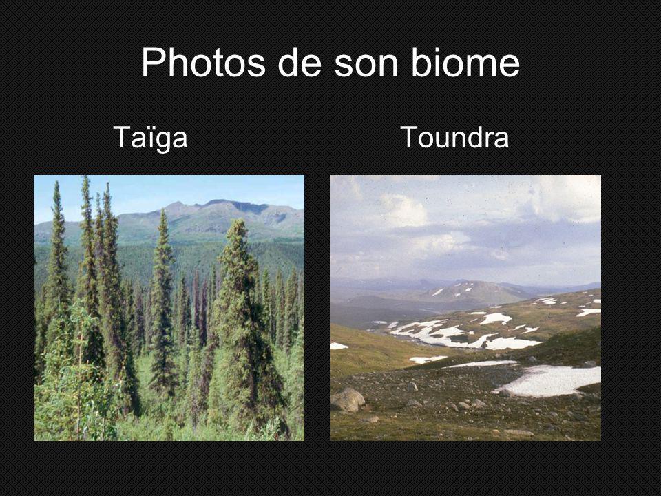 Photos de son biome Taïga Toundra