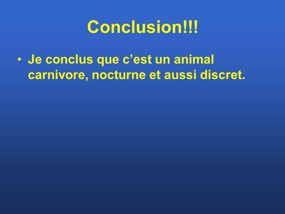 Conclusion!!! Je conclus que c'est un animal carnivore, nocturne et aussi discret.