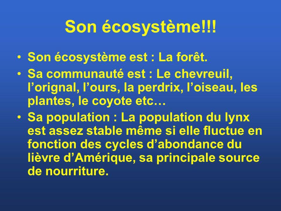 Son écosystème!!! Son écosystème est : La forêt.