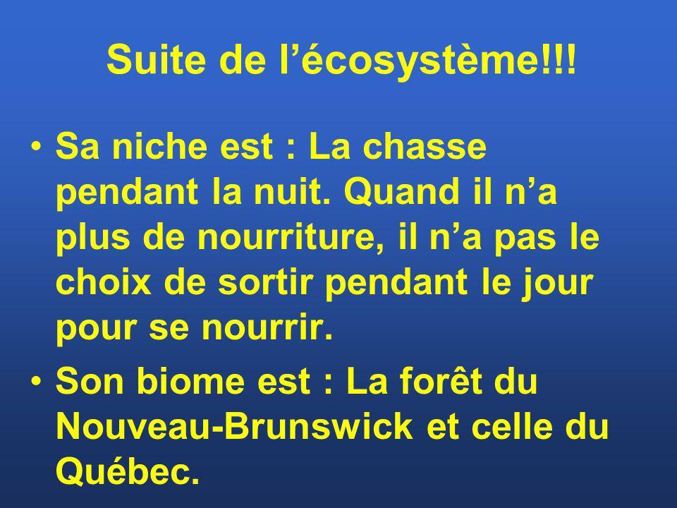 Suite de l'écosystème!!!