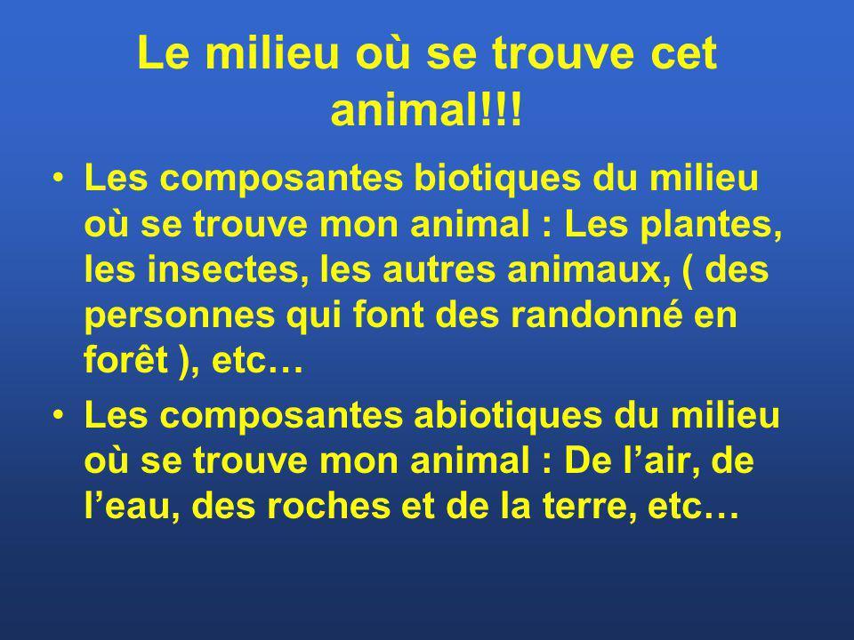 Le milieu où se trouve cet animal!!!