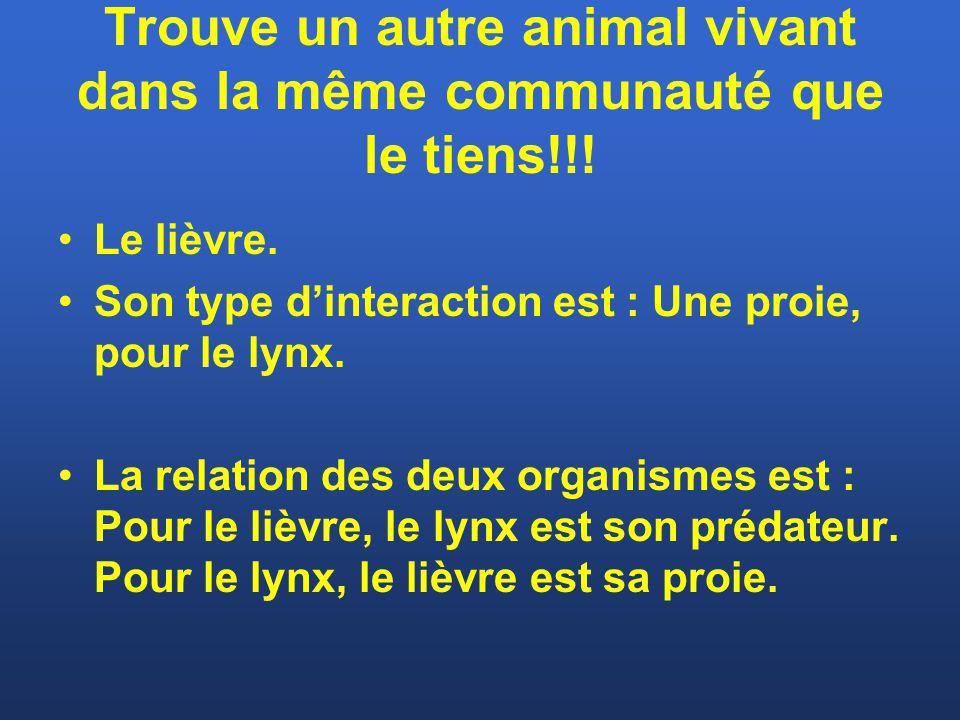 Trouve un autre animal vivant dans la même communauté que le tiens!!!