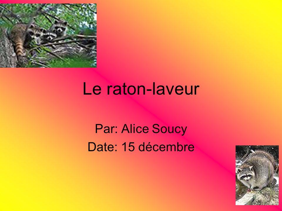 Par: Alice Soucy Date: 15 décembre