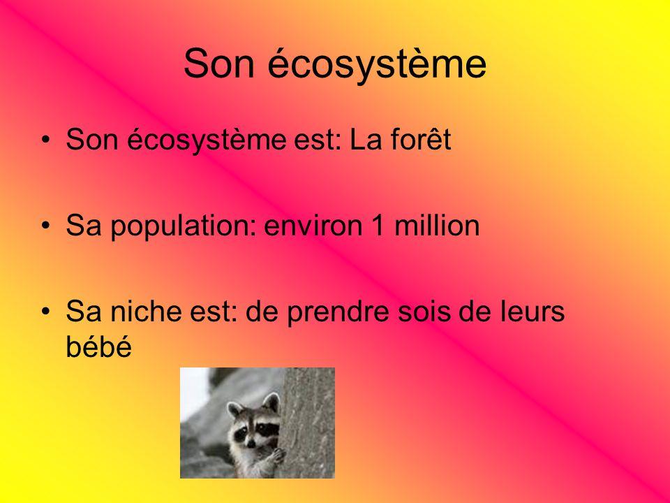 Son écosystème Son écosystème est: La forêt
