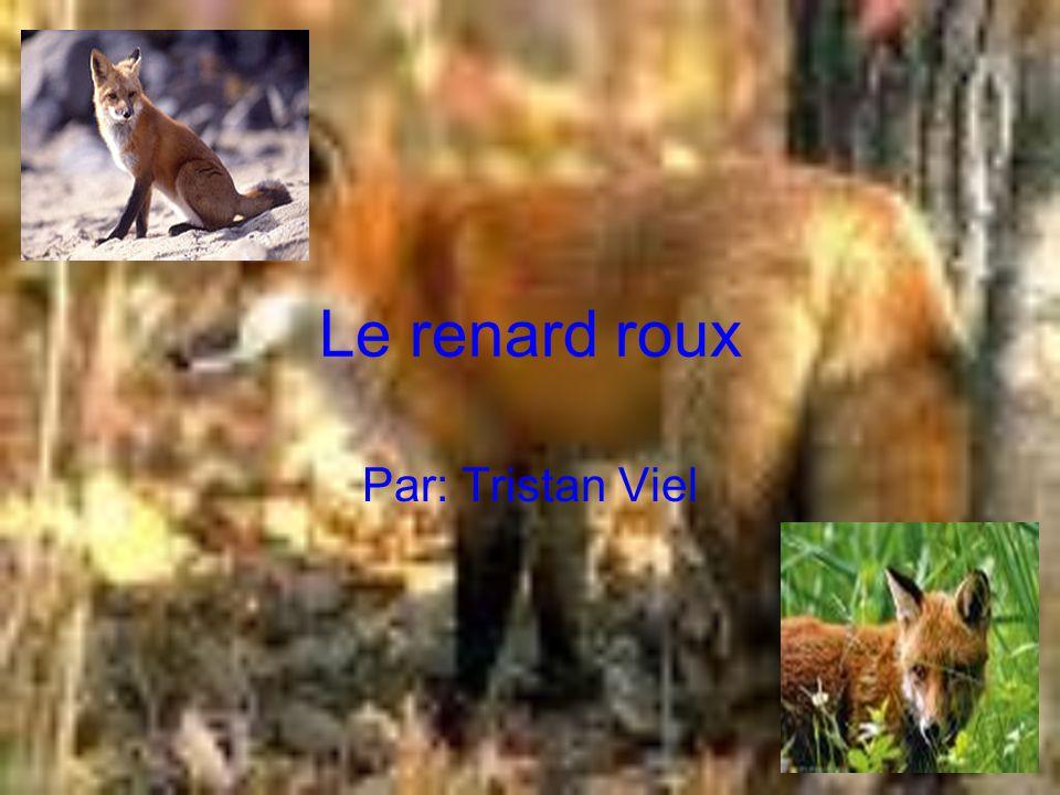 Le renard roux Par: Tristan Viel
