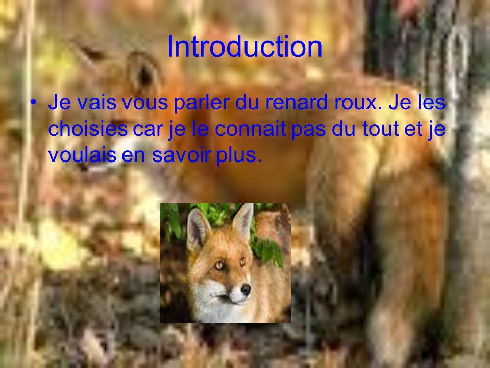 Introduction Je vais vous parler du renard roux.