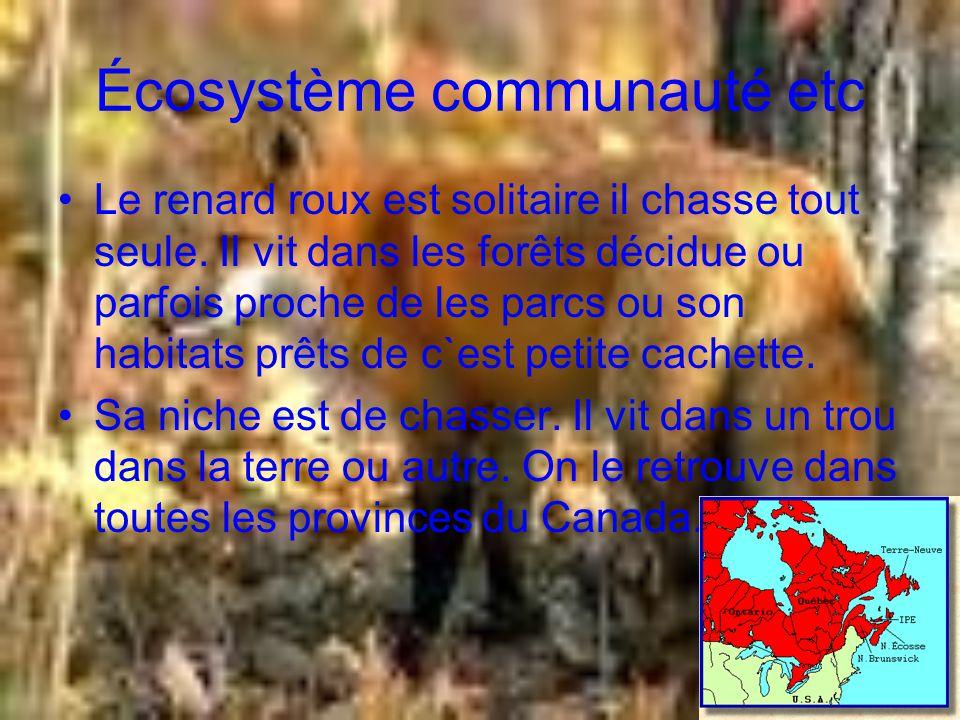 Écosystème communauté etc