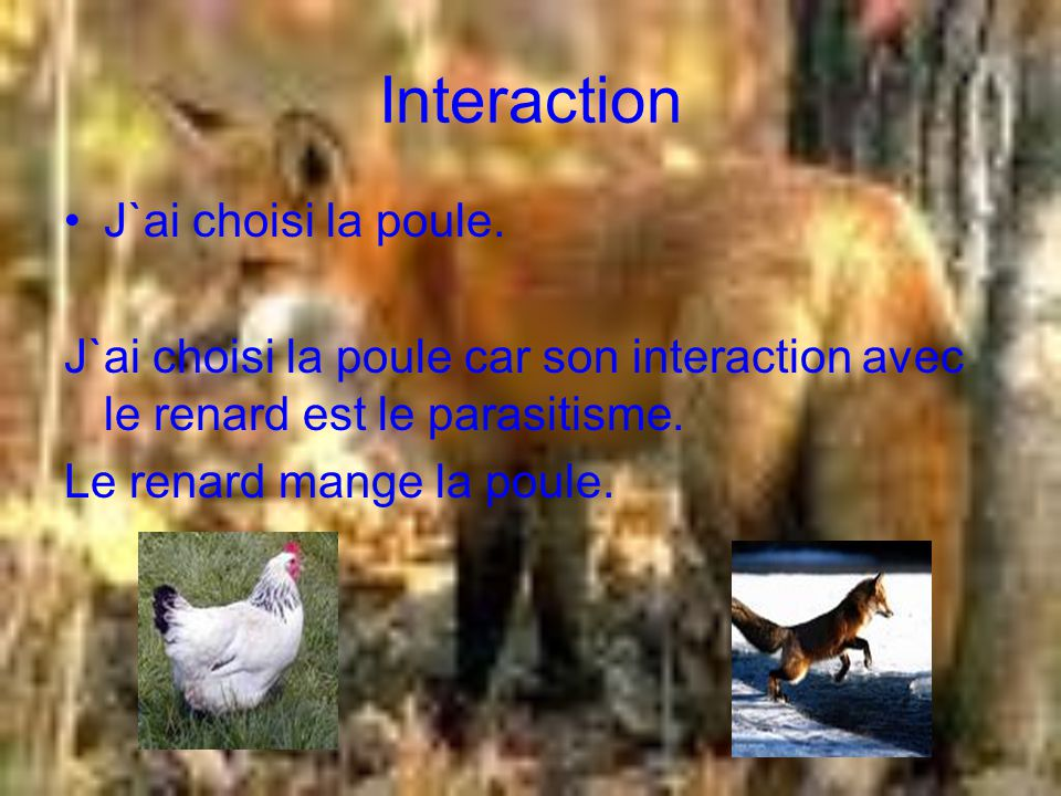 Interaction J`ai choisi la poule.