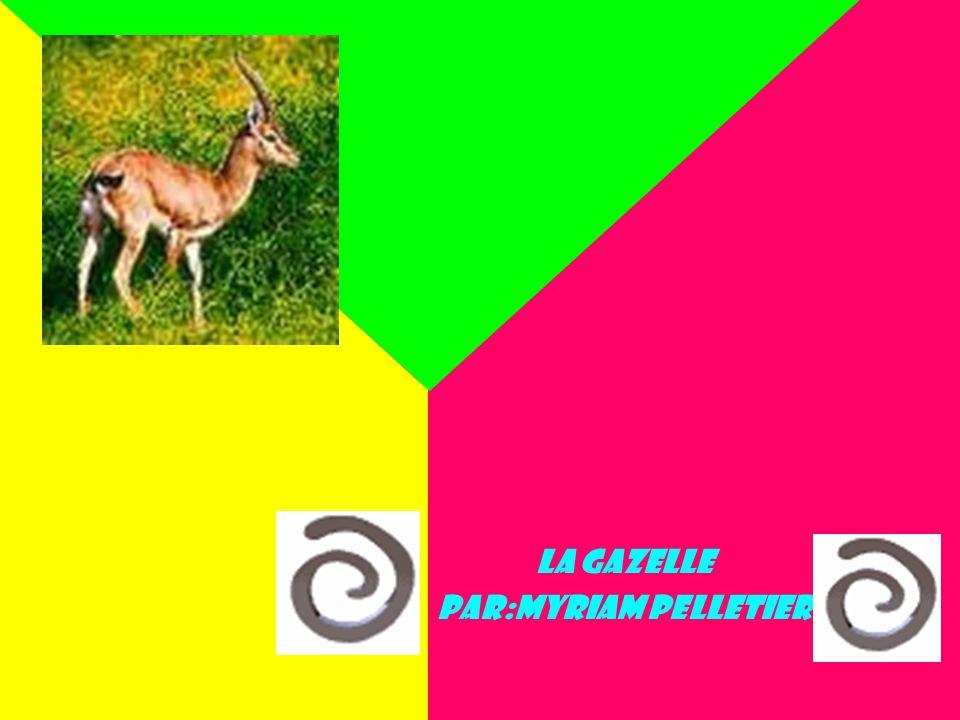 La gazelle Par:Myriam Pelletier