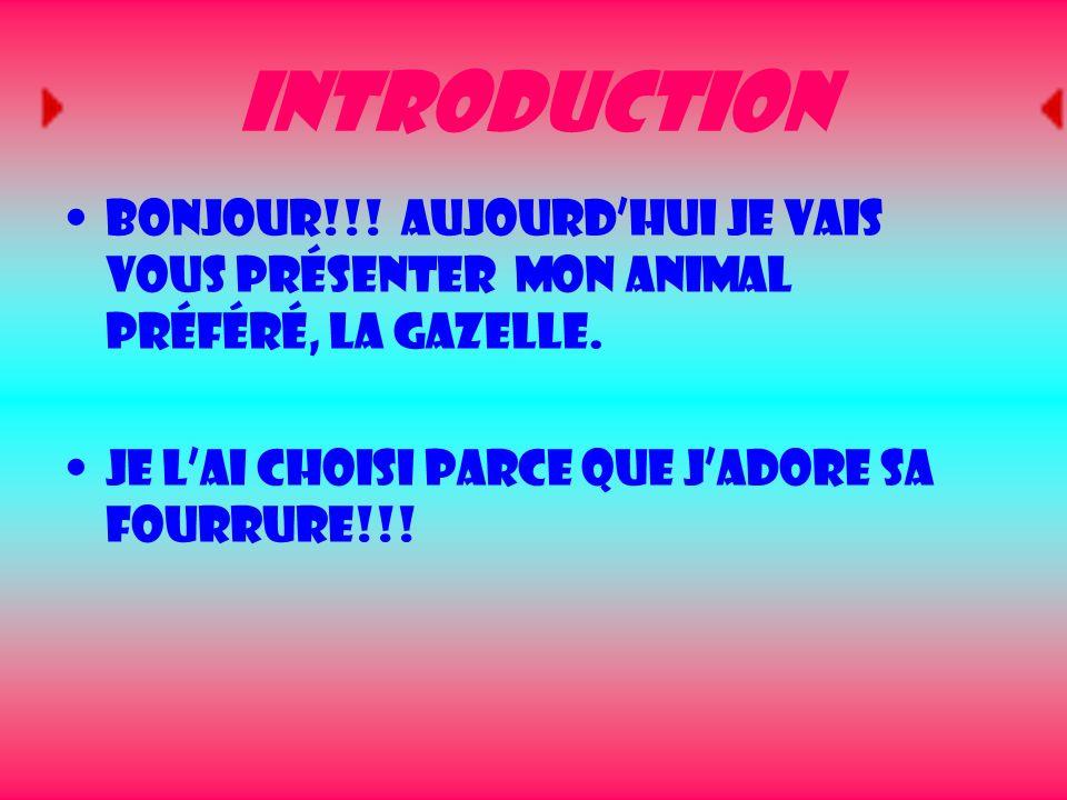 Introduction Bonjour!!. Aujourd'hui je vais vous présenter mon animal préféré, la gazelle.