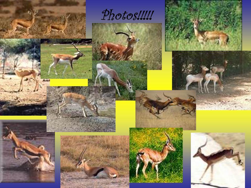 Photos!!!!!