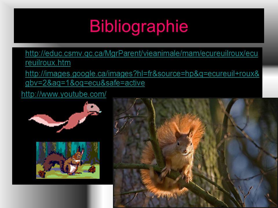 Bibliographie http://educ.csmv.qc.ca/MgrParent/vieanimale/mam/ecureuilroux/ecureuilroux.htm.