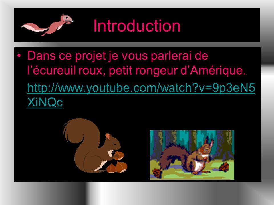Introduction Dans ce projet je vous parlerai de l'écureuil roux, petit rongeur d'Amérique.