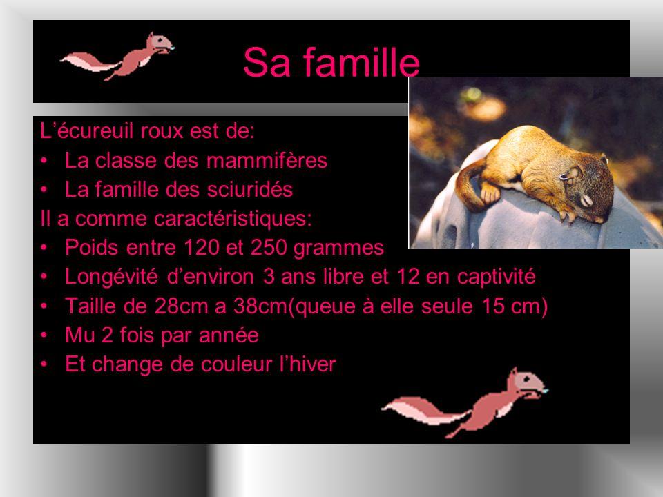 Sa famille L'écureuil roux est de: La classe des mammifères
