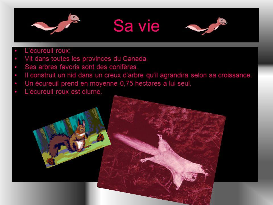 Sa vie L'écureuil roux: Vit dans toutes les provinces du Canada.