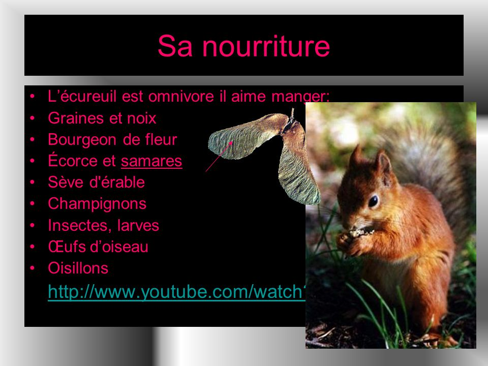 Sa nourriture http://www.youtube.com/watch v=_-qg6gWnRs4