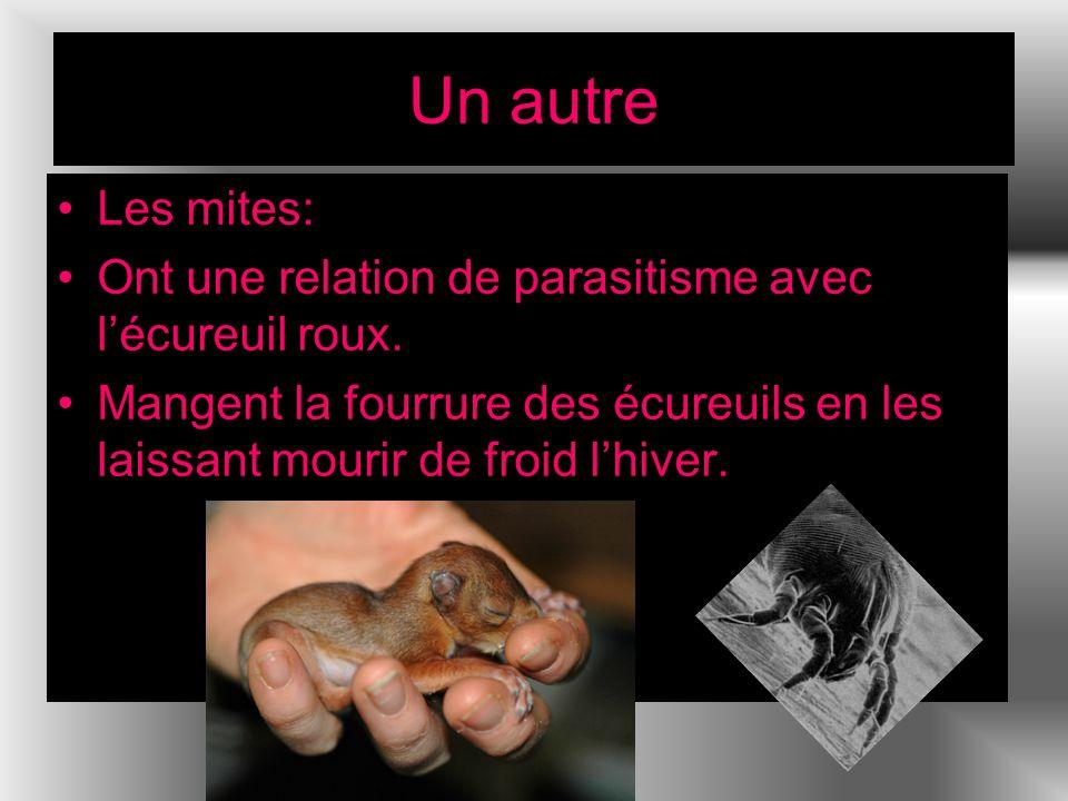 Un autre Les mites: Ont une relation de parasitisme avec l'écureuil roux.
