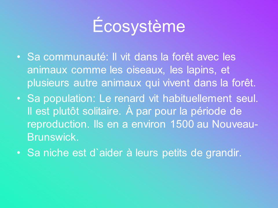 Écosystème Sa communauté: Il vit dans la forêt avec les animaux comme les oiseaux, les lapins, et plusieurs autre animaux qui vivent dans la forêt.