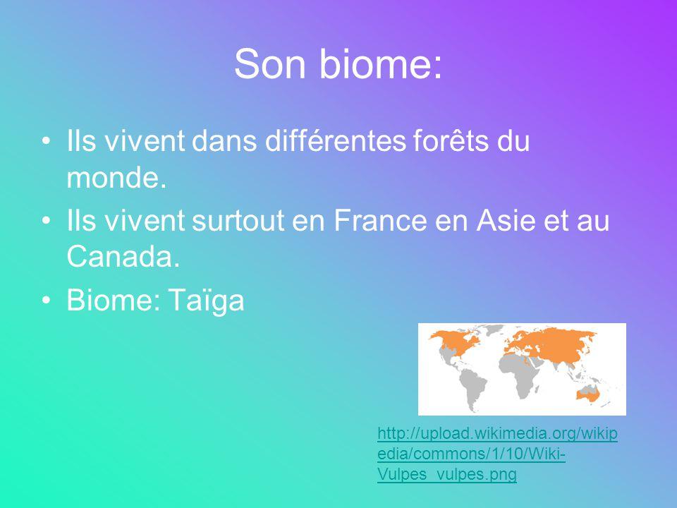 Son biome: Ils vivent dans différentes forêts du monde.