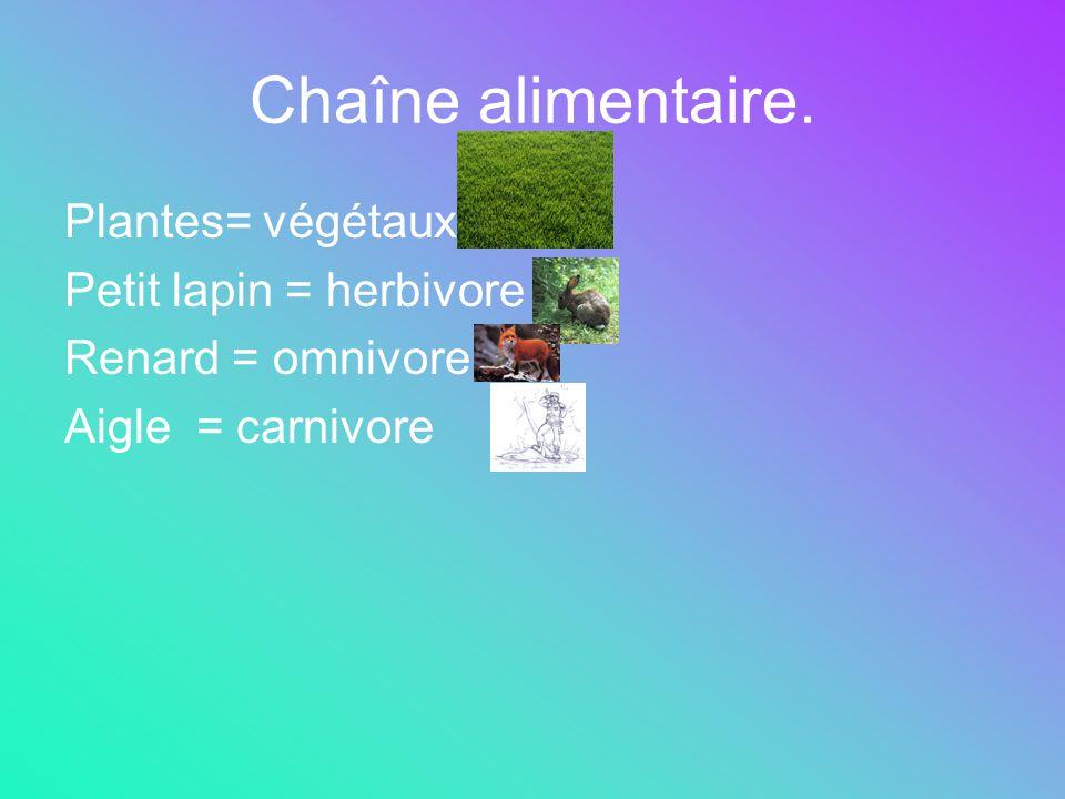 Chaîne alimentaire. Plantes= végétaux Petit lapin = herbivore