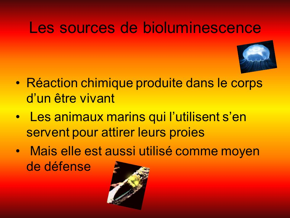 Les sources de bioluminescence