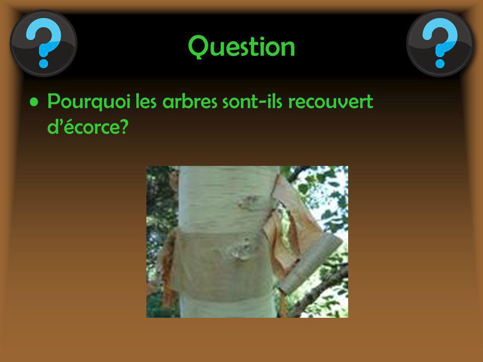 Question Pourquoi les arbres sont-ils recouvert d'écorce