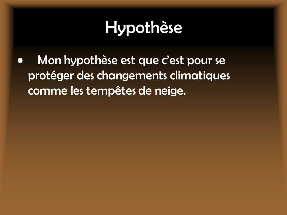 Hypothèse Mon hypothèse est que c'est pour se protéger des changements climatiques comme les tempêtes de neige.