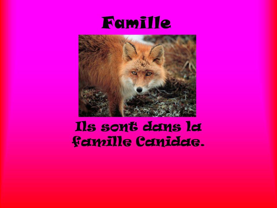 Ils sont dans la famille Canidae.