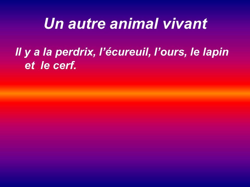 Un autre animal vivant Il y a la perdrix, l'écureuil, l'ours, le lapin et le cerf.