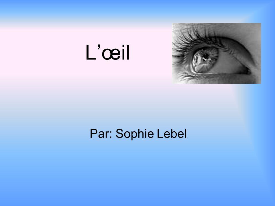 L'œil Par: Sophie Lebel