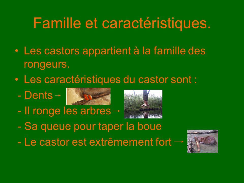 Famille et caractéristiques.