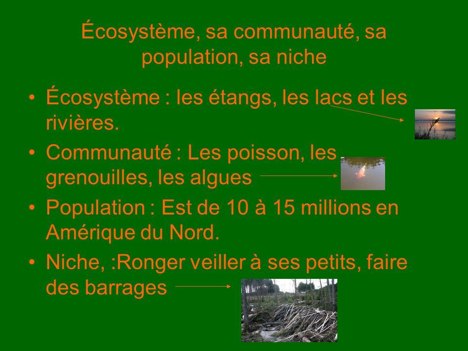 Écosystème, sa communauté, sa population, sa niche