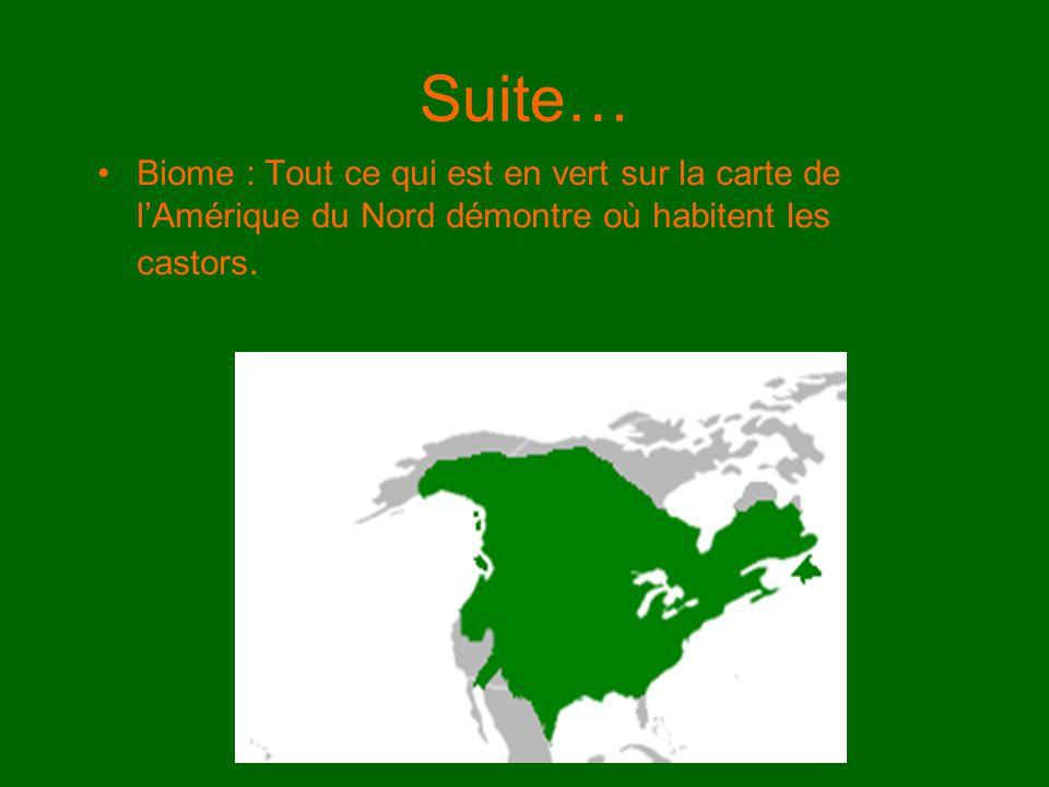 Suite… Biome : Tout ce qui est en vert sur la carte de l'Amérique du Nord démontre où habitent les castors.
