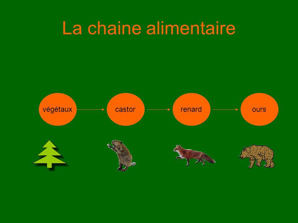 La chaine alimentaire végétaux castor renard ours