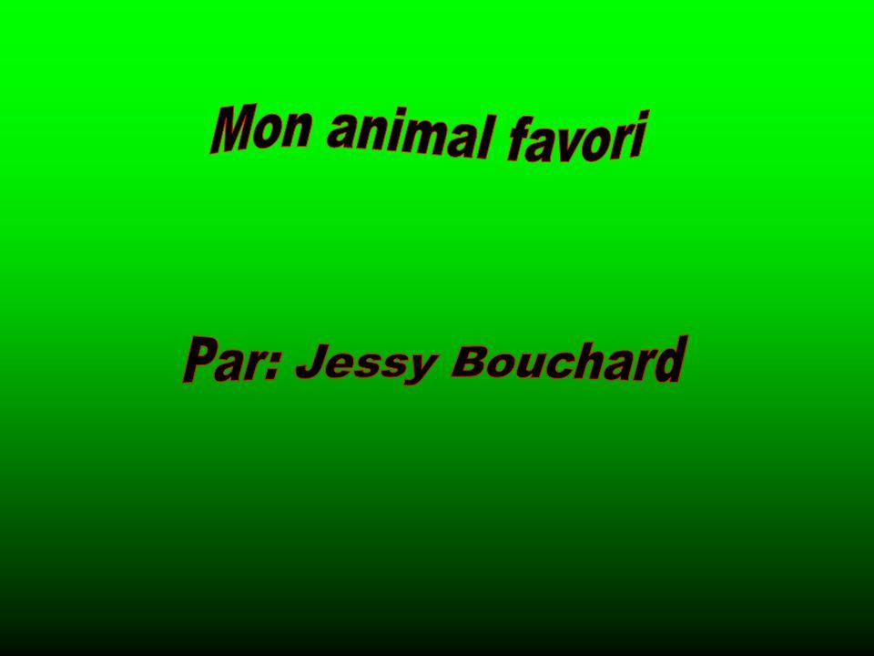 Mon animal favori Par: Jessy Bouchard