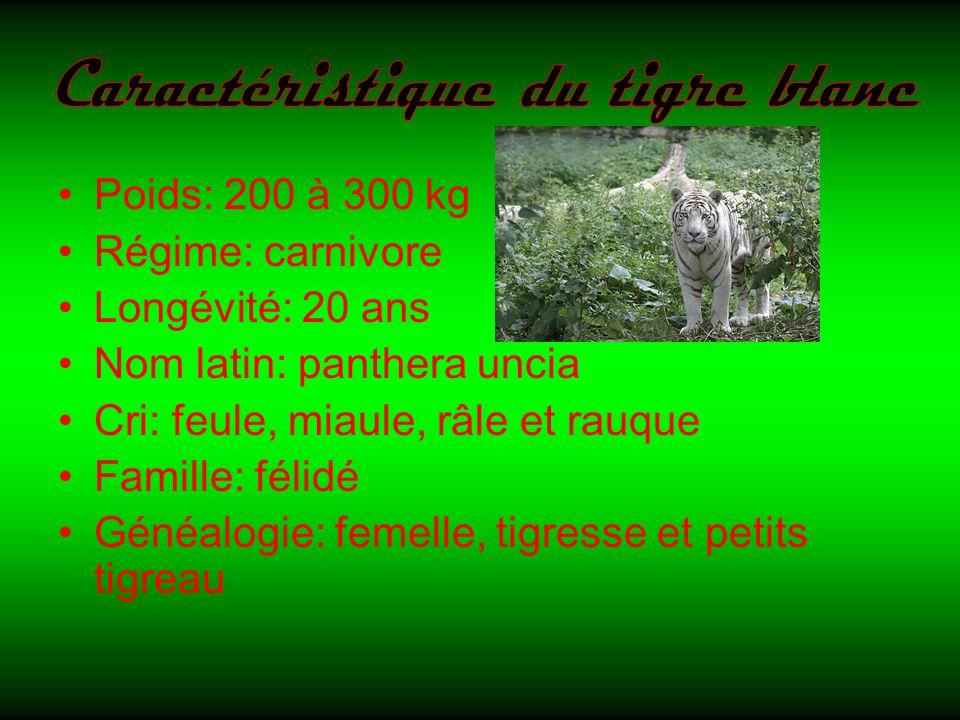 Caractéristique du tigre blanc