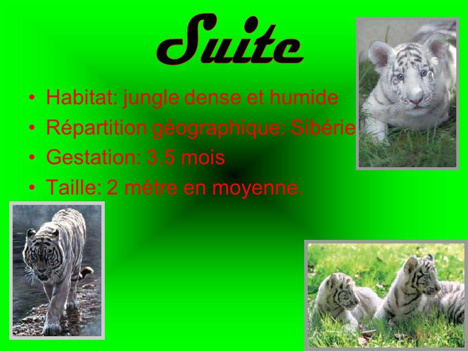 Suite Habitat: jungle dense et humide